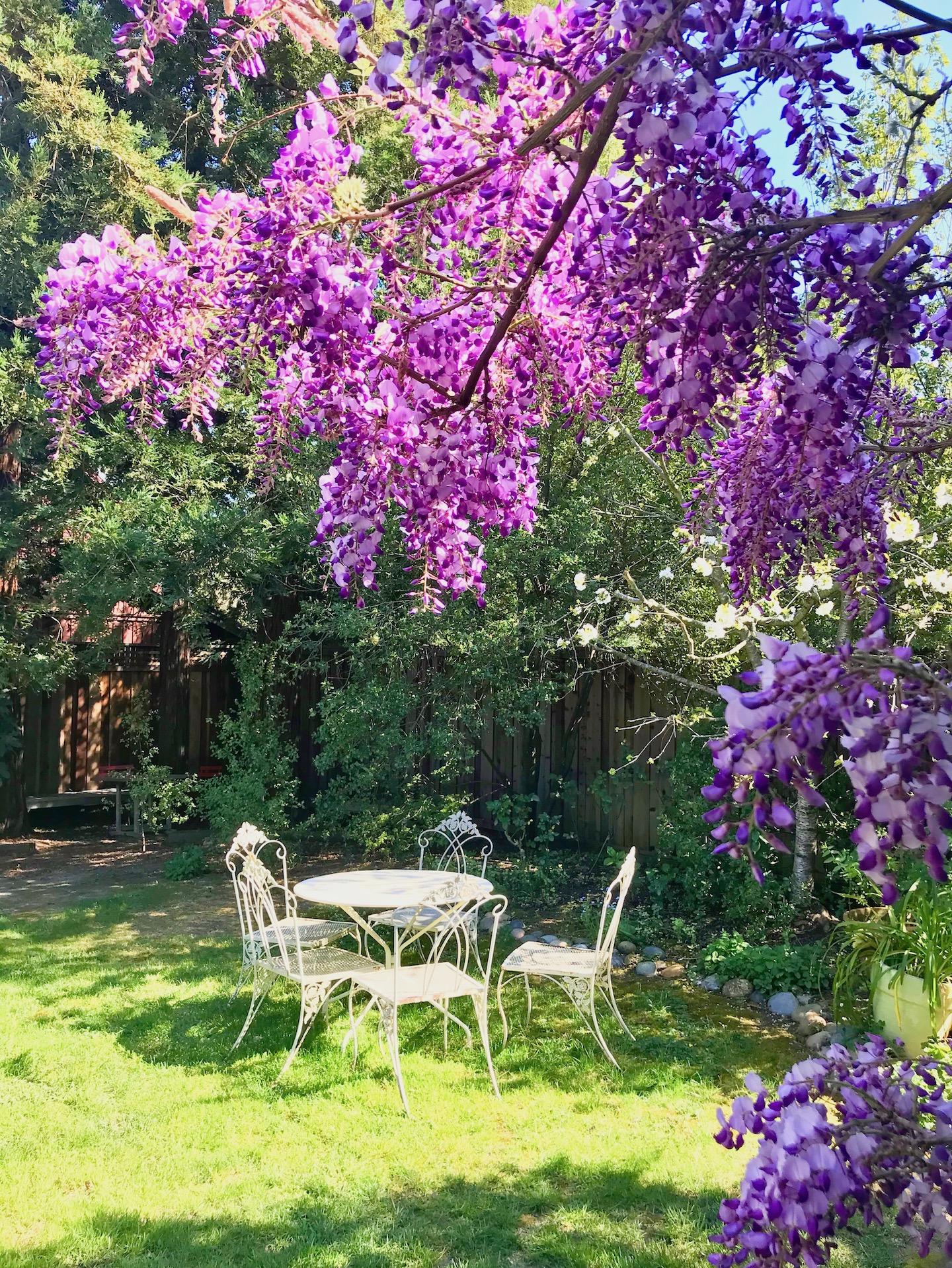 Butterly Garden